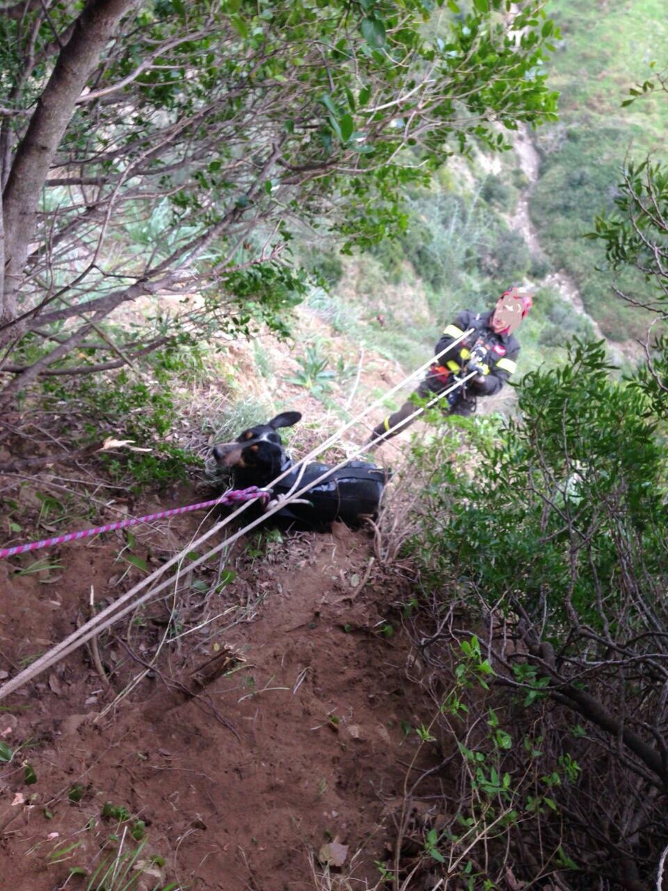 Terravecchia (CS) salvataggio cani vigili del fuoco