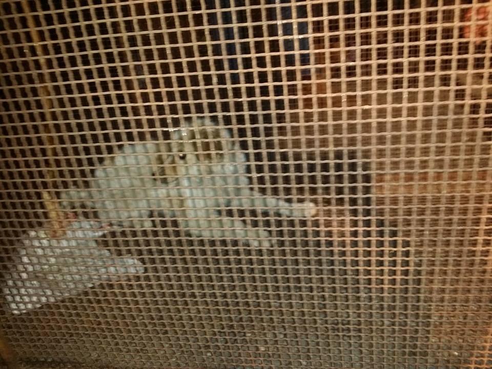Salvataggio cane a Reggio 4