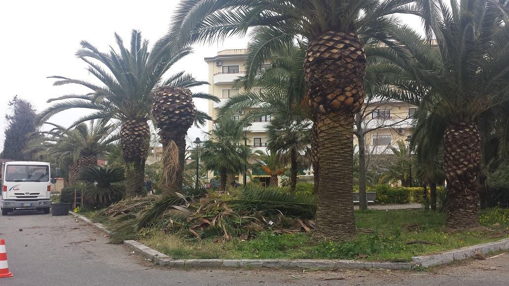 Palme quartiere Gallina