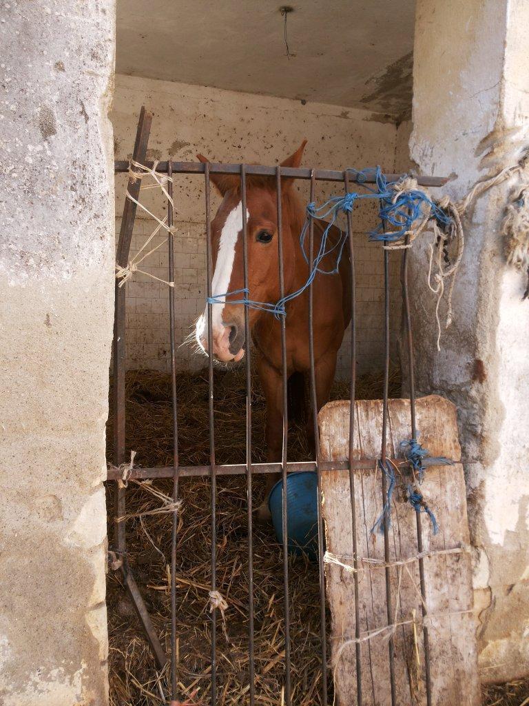 Cavallo in gabbia