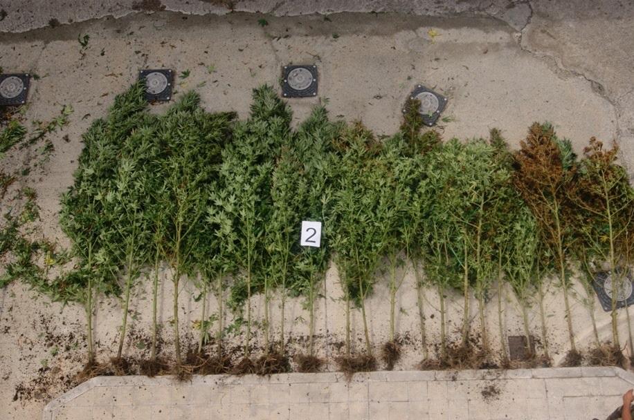 Arresti Locri per traffico di stupefacenti