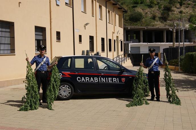 Soverato arresto per detenzione canabis