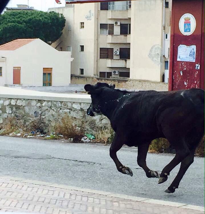 """Foto tratta da pagina Facebook """"Quelli che... Reggio Calabria"""""""