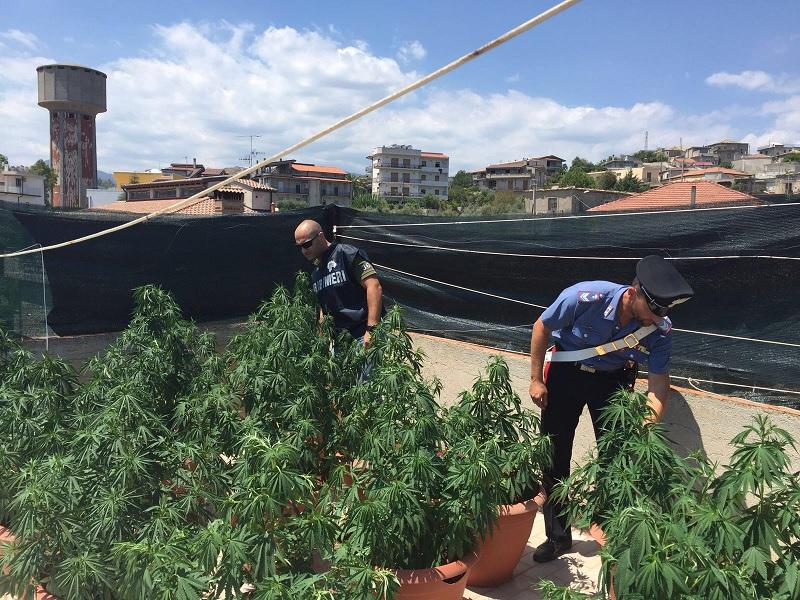Cannabis gruppo Locri
