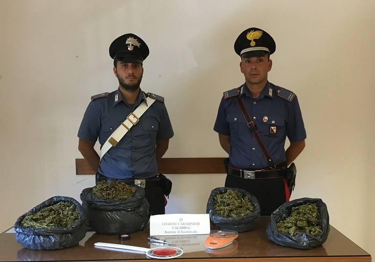 Marijuana sequestrata a Guardavalle