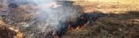 incendio uliveto Castellace