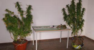 Maierato: coltivava cannabis, arrestato