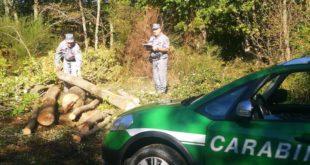 Trafugava legna di proprietà del Comune: sorpreso dai carabinieri