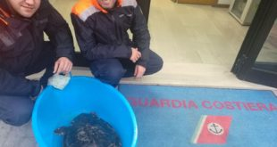 Cetraro, salvata una tartaruga Caretta-caretta