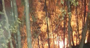 Prime giornate di caldo iniziano gli incendi in Calabria